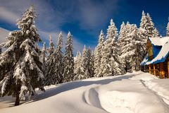 Old wooden shelter among huge fir trees covered with snow. On the mountain slope under blue sky - a winter morning in the mountains after snowfall. Wide angle royalty free stock image