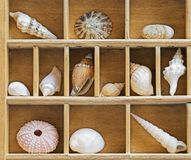 Old wooden showcase Royalty Free Stock Images