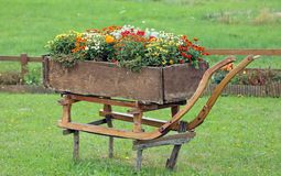 Old wooden sled decorated with vases of flowers in the mountain Stock Images