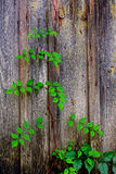 Old wooden stable door - detail Royalty Free Stock Photography