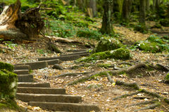 Old wooden staircase in the forest leading to the cave Royalty Free Stock Image
