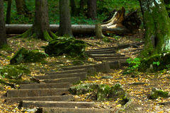 Old wooden staircase in the forest leading to the cave Stock Image