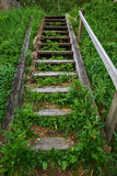 Old wooden staircase in the green Stock Photo