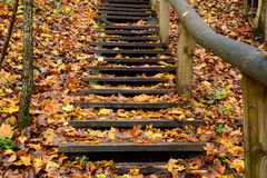Old wooden stairs in the forest Stock Images