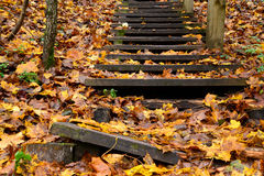Old wooden stairs in the forest Stock Image