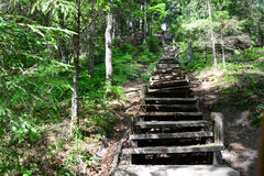 Old wooden stairs in the forest. Sigulda. Royalty Free Stock Image