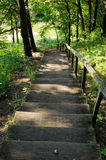 Old wooden stairs in forest Royalty Free Stock Photography