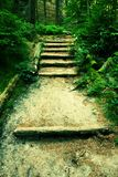 Old wooden stairs in overgrown forest garden, tourist footpath. Steps from cut beech trunks, fresh green branches above footpath. Old wooden stairs made from Stock Photos
