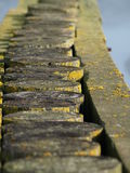 Old wooden stakes. With algas and moss in a harbor Stock Images