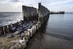 Old wooden stakes in the Baltic sea Stock Image