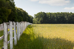 Old wooden stockade. Ancient fence on the field edge Stock Image
