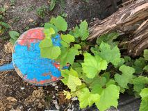 Old wooden stool with blue cracked paint stands. Old homely objects thrown out to the environment. An old wooden stool with blue cracked paint stands near a vine stock photo