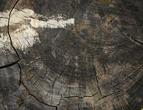 Old wooden stump Royalty Free Stock Images