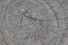 Old wooden stump Stock Images