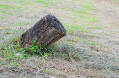 Old wooden stump in forest Stock Images