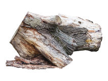 Old wooden stump log isolated over white Stock Image