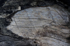 Old wooden surface and bark in black tone Royalty Free Stock Photos
