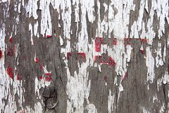 Old wooden surface with the remains of cracked oil-paint Stock Image