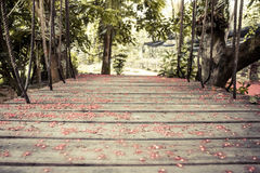Old wooden suspension bridge with ropes in tropical forest covered with red flowers. With selective focus on wooden planks and blurred background royalty free stock image