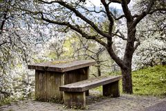 Old wooden table and bench in the orchard Stock Photography