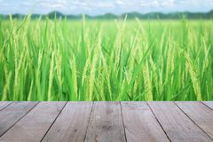 Old wooden table foreground with ear of paddy, Golden Rice Field, with sky and clouds background. Empty space Place a Rice products. Nature and health concept stock image