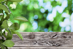 Old wooden table with green foliage. Stock Photography