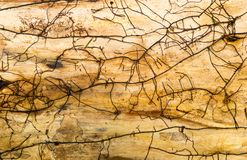 Old wooden texture, brown colors Royalty Free Stock Photography
