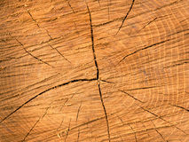 Old wooden texture Stock Photo