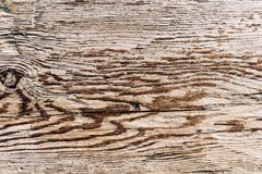 Old wooden texture with knots royalty free stock images