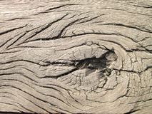 Old wooden texture made by nature. Dried wooden board stock photography