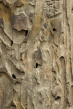 Old wooden texture with termite Stock Photos