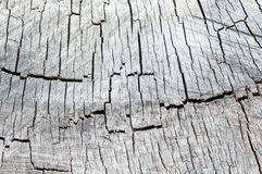 Old wooden texture of wood in the context Stock Photography