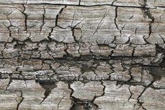Old wooden textures for web background. texture stock photography