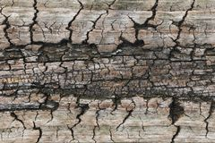 Old wooden textures for web background. texture. stock photo