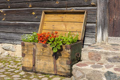 Old wooden treasure chest filled with blooming flowers. Royalty Free Stock Photography