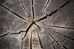Old Wooden Tree Stump Stock Images