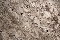 Old wooden trunk surface with bark beetle holes Stock Photos