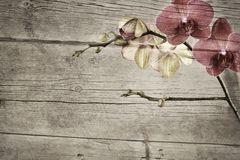 Old wooden vintage background with pink and magenta phalaenopsis orchid Royalty Free Stock Images
