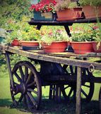 Old wooden wagon with vintage effect. Old wooden wagon with many pots of flowers in summer with vintage effect Royalty Free Stock Images