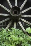 Old wooden wagon wheel. Closeup of an old wooden wagon wheel. The spokes of the wheel are rotting and slowly this wheel is being overgrown with weeds Royalty Free Stock Photos