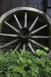 Old wooden wagon wheel. Closeup of an old wooden wagon wheel. The spokes of the wheel are rotting and slowly this wheel is being overgrown with weeds Stock Photography