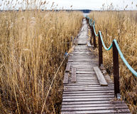 Old wooden walkway Royalty Free Stock Photo