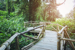 Old wooden walkway in forest with sunlight at Chiang mai Thailand Stock Image