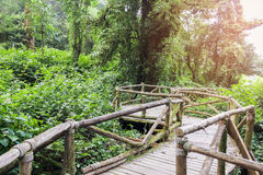 Old wooden walkway in forest with sunlight at Chiang mai Thailand. Royalty Free Stock Photo