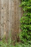 Old wooden wall covered with ivy copyspace Stock Photo