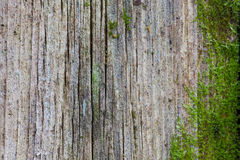 Old wooden wall with green moss Royalty Free Stock Photos