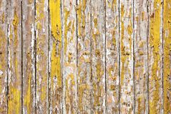 Old wooden wall painted with yellow color peeling revealed rustic texture. The old wooden wall painted with yellow color cracking, peeling and revealed the spike Royalty Free Stock Image