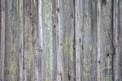 The old wooden walls painted green. Old wooden wall background or texture. Old wooden wall background or texture The old wooden walls painted green stock images