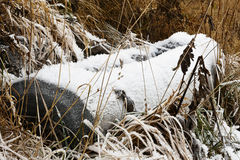 Old wooden well in a cold and frozen scenery. Old wooden water well is frozen and stands in long grass with ice on it Royalty Free Stock Photos