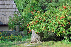 Old wooden well under viburnum Royalty Free Stock Photo